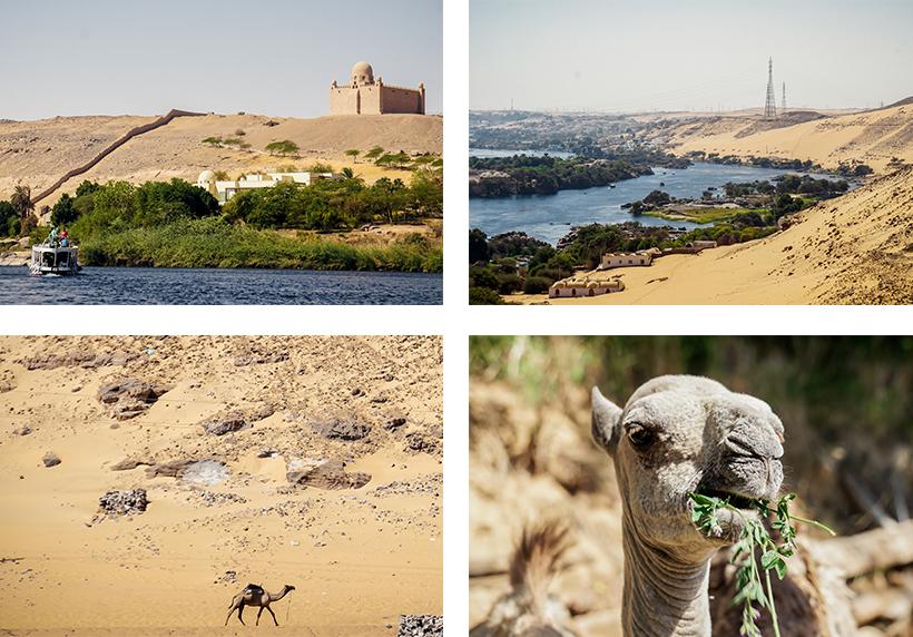Unterwegs mit dem Ausflugsboot am Nil / Der Nil und Assuan von oben / (hungrige) Kamele wohin das Auge schaut