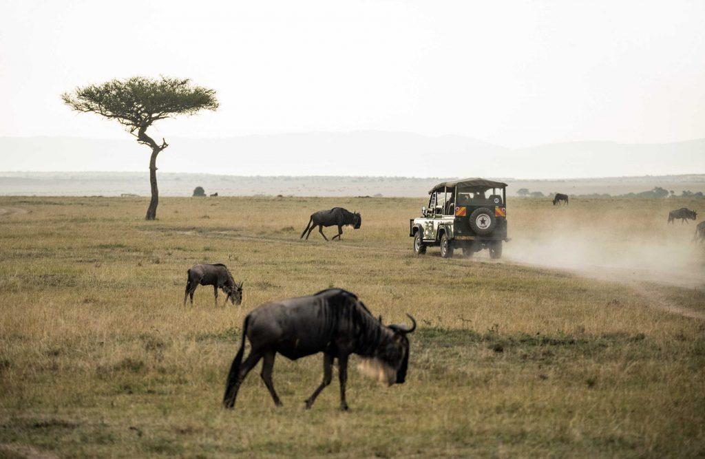 Die besten Nationalparks für eine Safari in Südafrika